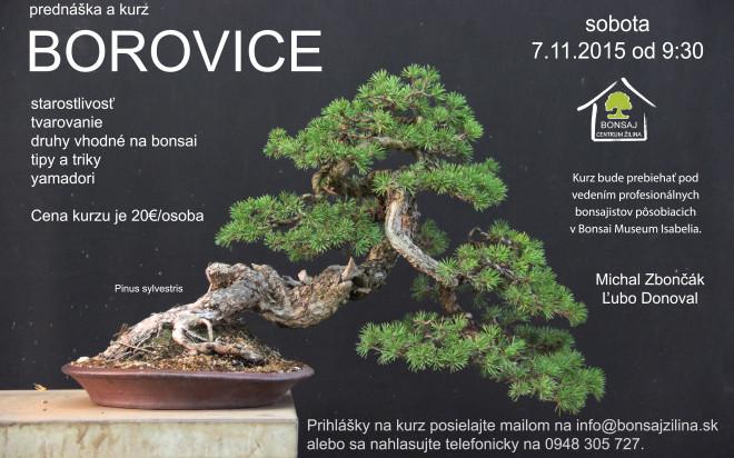BOROVICE_2